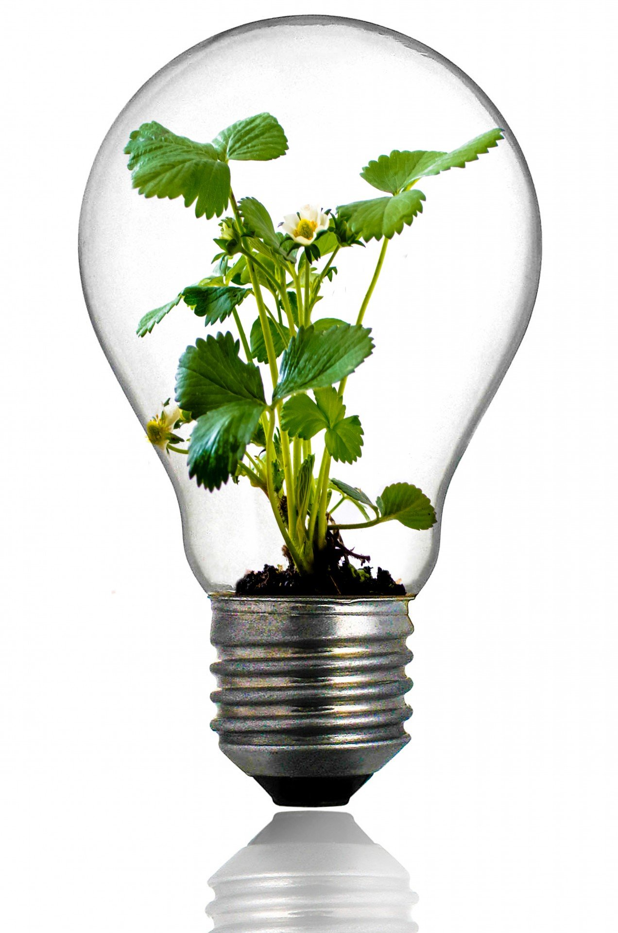 green plant in the light bulb